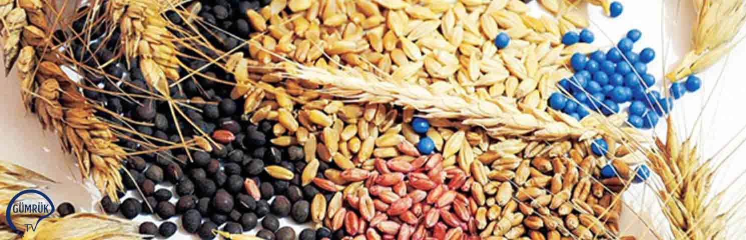 Ukrayna'nın Tahıl Hasadında 25 Yıllık Rekor