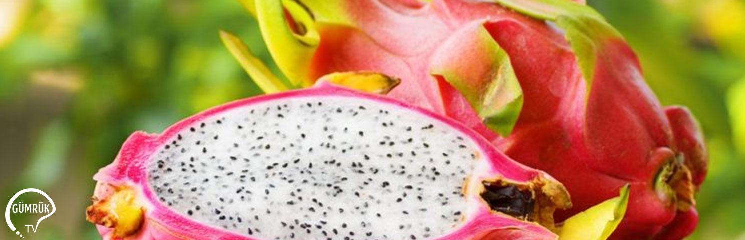 Ejder Meyvesi Yüksek Getirisiyle Çiftçiye Umut Oldu
