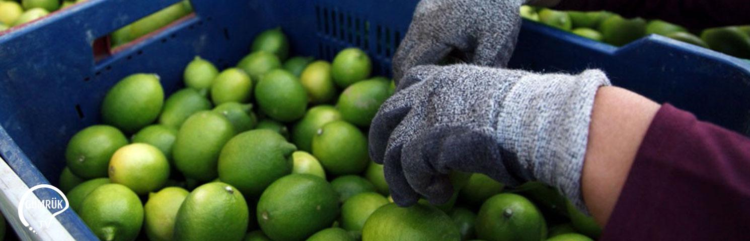 Tarım ve Gıda İhracatı Arttı, İthalat Geriledi