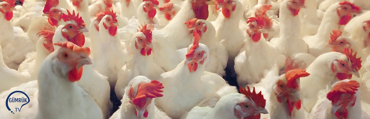 Danimarka Kümes Hayvanı Et İthalatına Hong Kong'tan Yasak