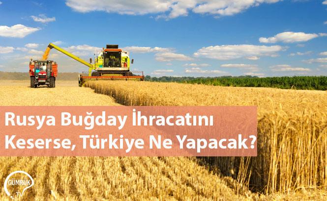 Rusya Buğday İhracatını Keserse, Türkiye Ne Yapacak?