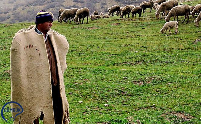 Sırada İthal Çoban Var
