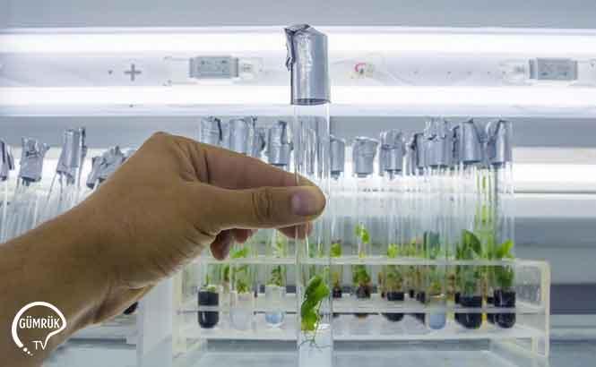 Bitki ve Bitkisel Ürün Analiz İşlemleri Hangi Tarihte Nerede Yapılacak?