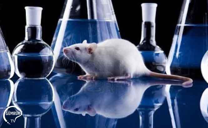 Bilimsel Amaçlı Hayvan Kullanımında Covid-19 Tedbirleri