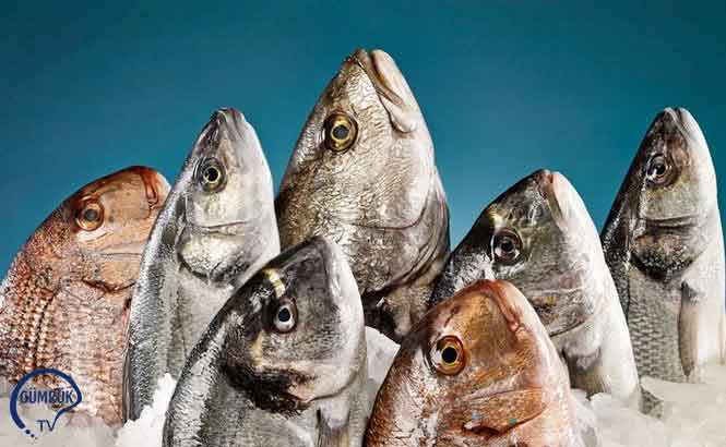 Balık İhracatının Yüzde 60'ı Avrupa'ya