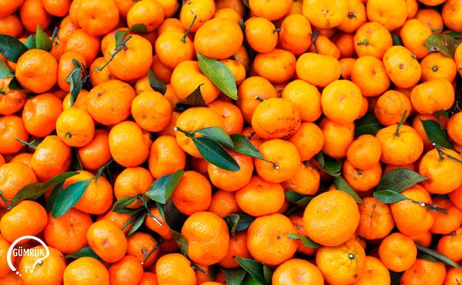 Satsuma Mandarinin Kesim ve İhraç Tarihi Belli Oldu