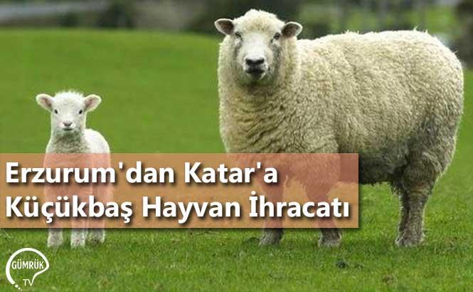 Erzurum'dan Katar'a Küçükbaş Hayvan İhracatı