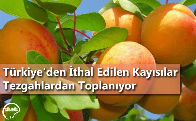 Türkiye'den İthal Edilen Kayısılar Tezgahlardan Toplanıyor