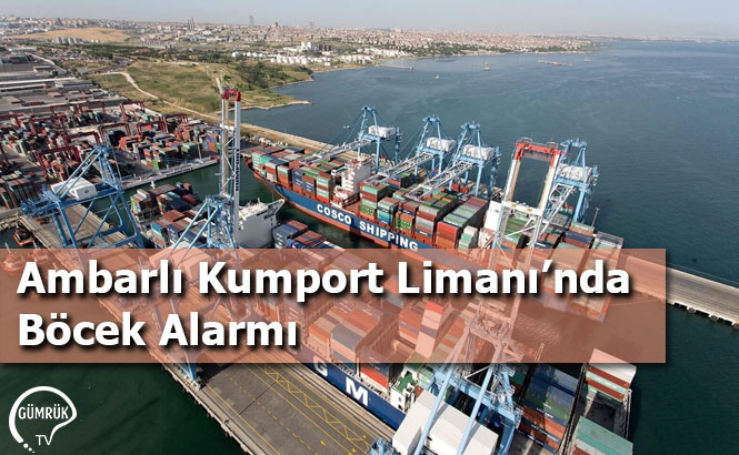 Ambarlı Kumport Limanı'nda Böcek Alarmı