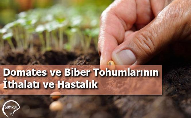 Domates ve Biber Tohumlarının İthalatı ve Hastalık