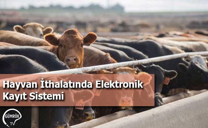 Hayvan İthalatında Elektronik Kayıt Sistemi