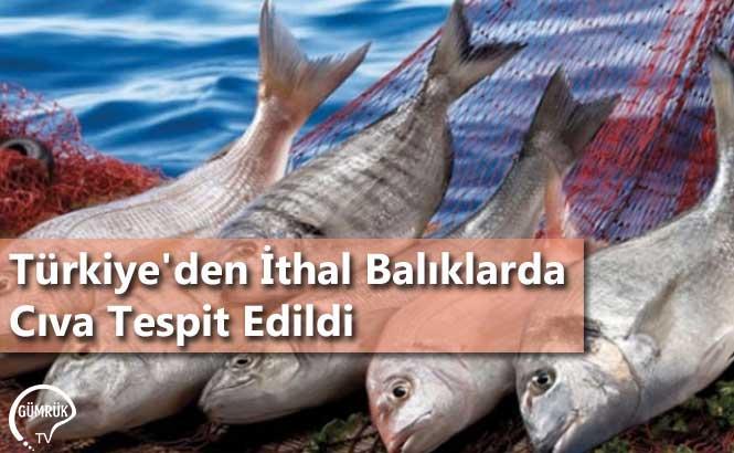 Türkiye'den İthal Balıklarda Cıva Tespit Edildi