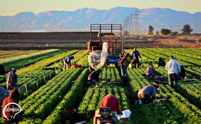 ABD'den Çiftçilere 20 Milyarı Aşan Destek
