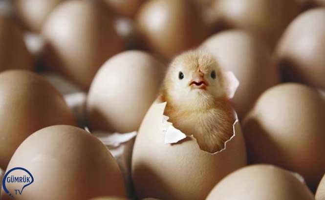 Avrupa'ya 6 Yıl Sonra Yumurta İhracatı Başladı