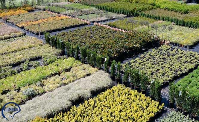 Türkiye, Hollanda'ya Ağaç İhraç Etti