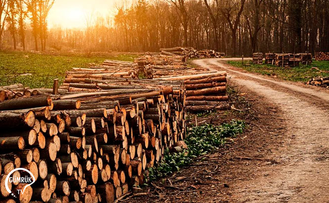 Orman Ürünleri İhracat Kısıtlamasında Süre Uzatımı