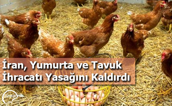 İran, Yumurta ve Tavuk İhracatı Yasağını Kaldırdı