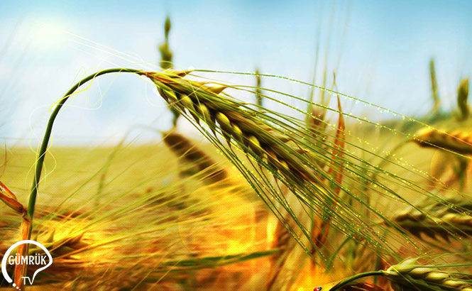 Tarımda 2017'ye İthalat Politikaları Damgasını Vurdu