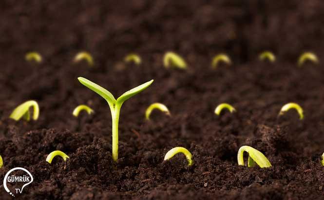 Türkiye Dışarıya Sattığı Sebze Tohumlarını Ortalama '8 Kat Fazla Para Ödeyerek Geri Alıyor'