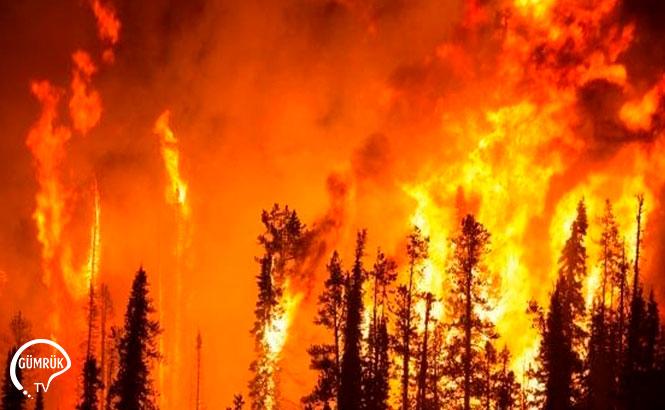 Ciğerlerimiz Yandı: 22 İlde Orman Yangını Çıktı