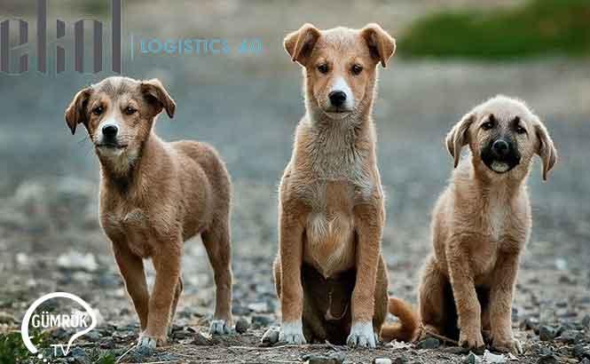 Ekol'den Korona Günlerinde Hayvanları Unutmayın Çağrısı
