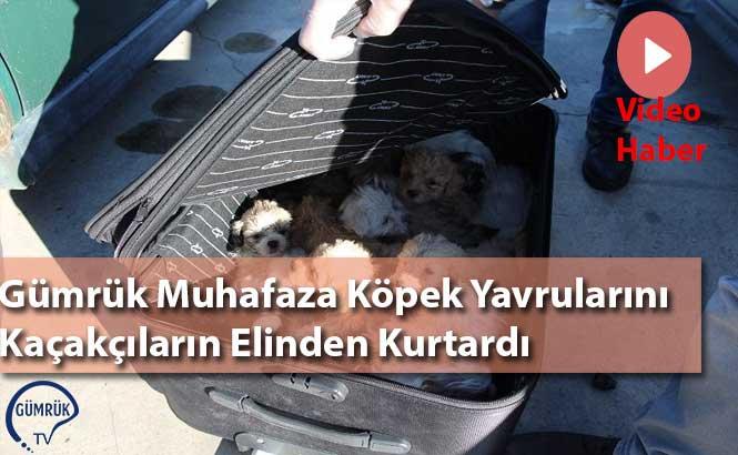 Gümrük Muhafaza, Köpek Yavrularını Kaçakçıların Elinden Kurtardı