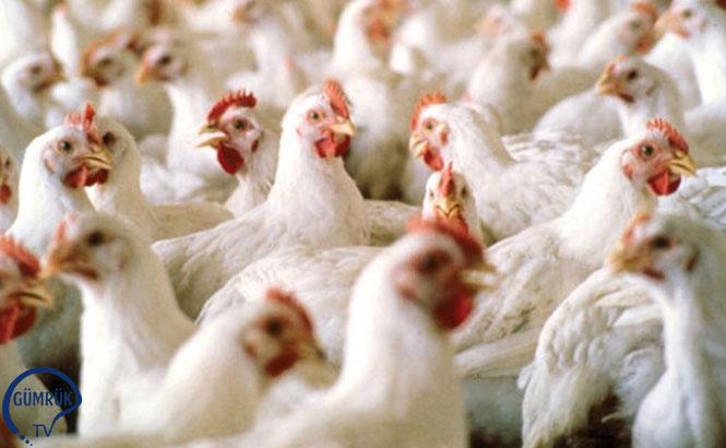 Bosna Hersek'in Kanatlı Ürün İhracatı Önemli Derecede Arttı