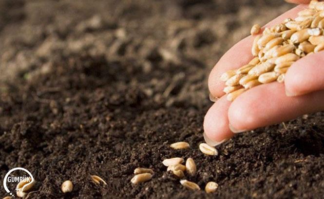Tohumların Dışarıdan Alındığı Doğru Değil, 76 Ülkeye İhracat Yapıyoruz