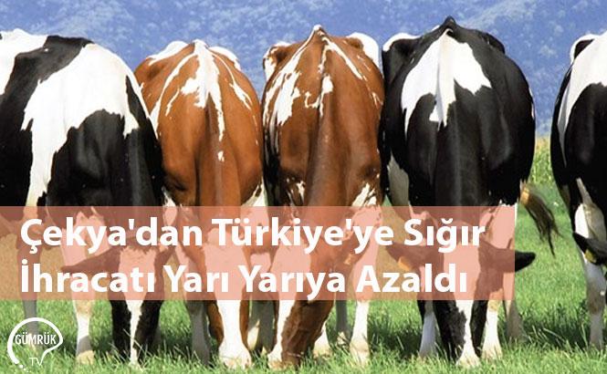 Çekya'dan Türkiye'ye Sığır İhracatı Yarı Yarıya Azaldı
