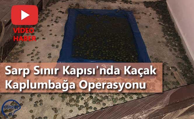 Sarp Sınır Kapısı'nda Kaçak Kaplumbağa Operasyonu