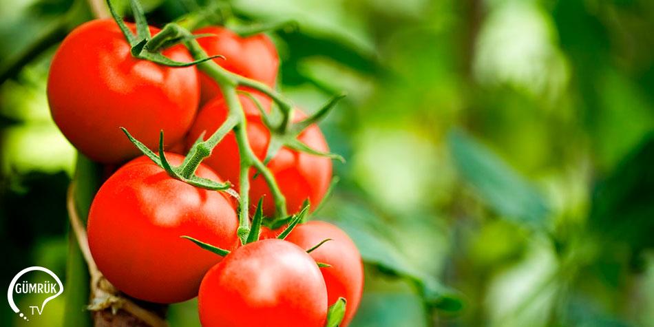 Yaş Meyve Sebze Ürünlerinde En Fazla İhraç Edilen Ürün Domates