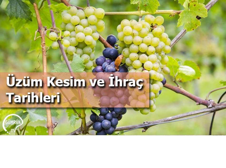 Üzüm Kesim ve İhraç Tarihleri