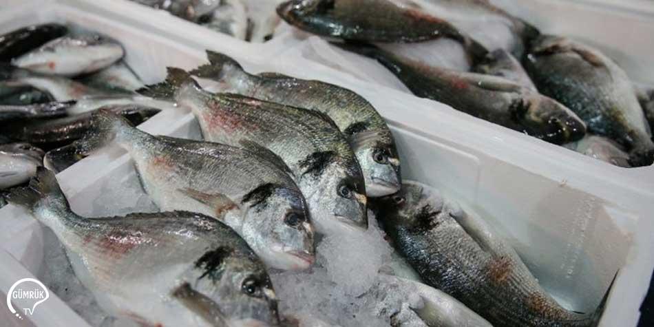 1 Milyar Dolarlık Balık İhracatı